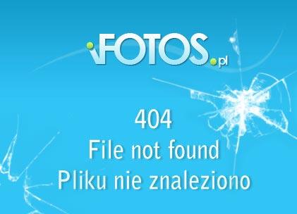 Narodziny obledu / First Born (2007) DVDRip Lektor PL